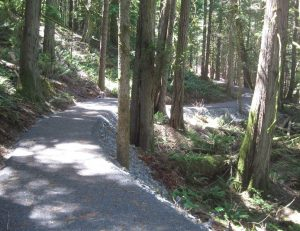 crushed-gravel-path-through-mature-forest