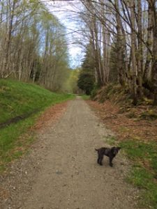 trail-view