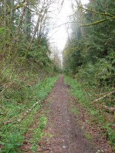 typical-trail-section-on-old-railway-bed