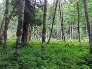 elk-pasture-resized