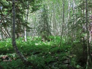 foliage-on-trail-resized