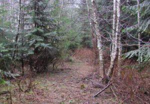 trail-on-floodplain-before-midpoint-resized