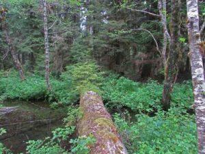 walk-log-resize