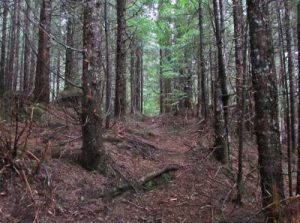 wooded-trail-before-midpoint-resized