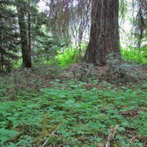 ds-photo-12-og-spruce