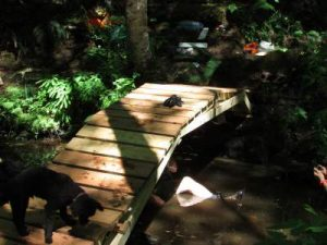 ds-photo-5-grilse-bridge