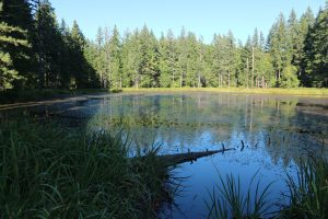 lower-beaver-pond-ss