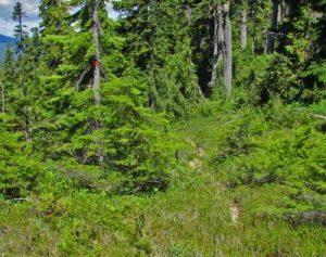 ds-19-ash-pond-trail-near-becher-trail