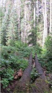 ds-25-logs-over-mckenzie-inflow-creek