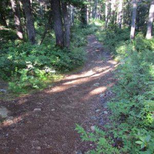 ds-4-plateau-trail-before-becher-jct