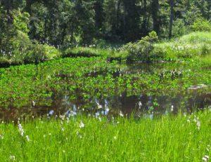 ds-5-marsh-and-fen