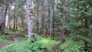 ds32-forbidden-crossing-trail-just-w-of-mckenzie-meadows